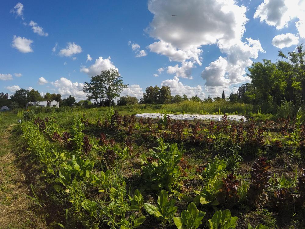 huerta-agroecológica